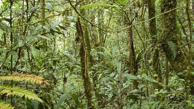 A rainforest in Malaysia.