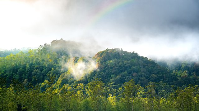 This image shows a forest giving off moisture into the air, or transpiring.