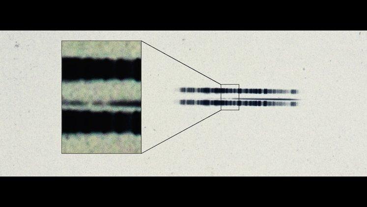 Close-up of spectrum of van Maanen's Star.  Credit: Carnegie Institution for Science