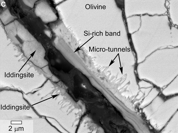 This scanning electron microscope image of a polished thin section of a meteorite from Mars shows tunnels and curved microtunnels.