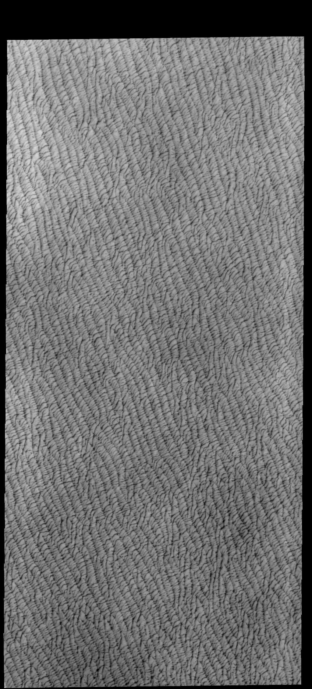 This image from NASA's Mars Odyssey shows a portion of Olympia Undae, a large dune field located near the north pole.